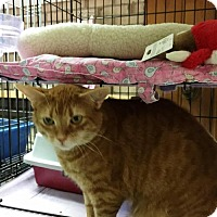 Adopt A Pet :: Destiny - Fairfax, VA