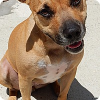 Adopt A Pet :: Miss Frankie - Long Beach, NY