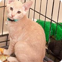 Adopt A Pet :: Buffy - San Jose, CA