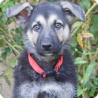 Adopt A Pet :: Parker von Geneva - Thousand Oaks, CA