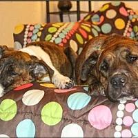 Adopt A Pet :: BERTHA & BETSY - Chandler, AZ