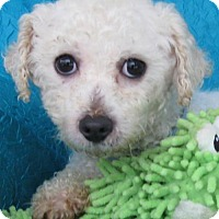 Adopt A Pet :: Gorden - Cuba, NY