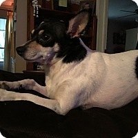 Adopt A Pet :: Cricket - Hohenwald, TN
