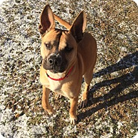 Adopt A Pet :: Kyla - Morgantown, WV