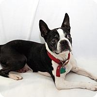 Adopt A Pet :: Dixon - Cumberland, MD