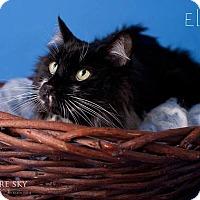 Adopt A Pet :: Ely - Glendale, AZ