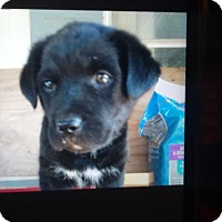 Adopt A Pet :: Onyx - springtown, TX
