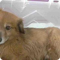 Adopt A Pet :: PEPPERDYNE - Conroe, TX