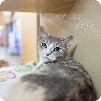 Adopt A Pet :: Rosemary - Statesville, NC
