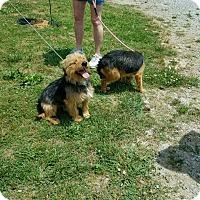 Adopt A Pet :: Ansel - Harmony, Glocester, RI
