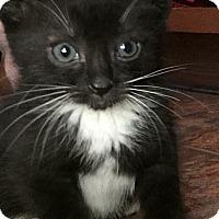 Adopt A Pet :: Acapulco - Mount Laurel, NJ