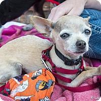 Adopt A Pet :: Penelope - San Marcos, CA