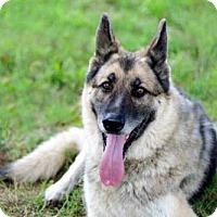 Adopt A Pet :: ADMIRAL - Washington, DC