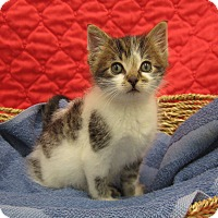 Adopt A Pet :: Oscar - Redwood Falls, MN