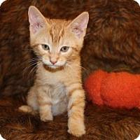 Adopt A Pet :: Thanksgiving: Sweet Potato Pie - Las Vegas, NV
