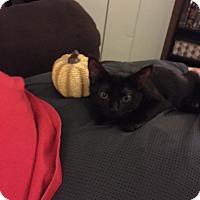 Adopt A Pet :: Juno - Trevose, PA