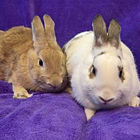 Adopt A Pet :: Kiff and Thumper - Lewisville, TX