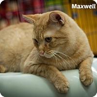 Adopt A Pet :: Maxwell - Oakville, ON