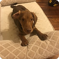 Adopt A Pet :: Trace - Jackson, MS
