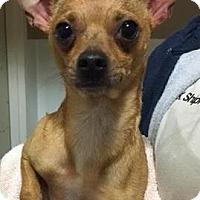 Adopt A Pet :: 17-01-0156b Luis - Dallas, GA