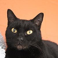 Adopt A Pet :: Jett - Sarasota, FL