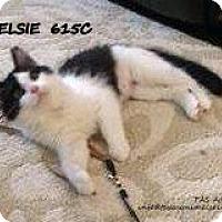 Adopt A Pet :: Elsie - Spring, TX
