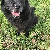 Border Collie Mix Dog for adoption in Jackson, Mississippi - Furlough