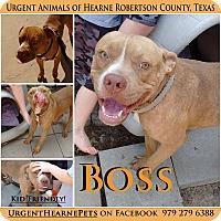 Adopt A Pet :: Boss - Hearne, TX