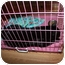 Photo 3 - Domestic Shorthair Cat for adoption in Loveland, Colorado - Maxwell