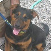 Adopt A Pet :: Jake - latrobe, PA