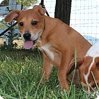 Adopt A Pet :: Janet--Reduced fee $300 - Spring Valley, NY