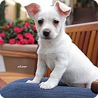 Adopt A Pet :: Clyde - Costa Mesa, CA