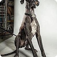Adopt A Pet :: Duke - Virginia Beach, VA