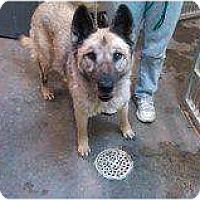 Adopt A Pet :: Sheeba - Alliance, NE