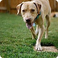 Adopt A Pet :: Les - Marietta, GA