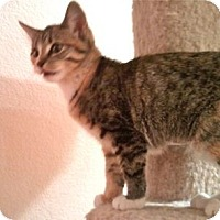 Adopt A Pet :: K-Stephanie2-Stephanie - Colorado Springs, CO