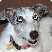 Adopt A Pet :: Daffy - Santa Rosa, CA