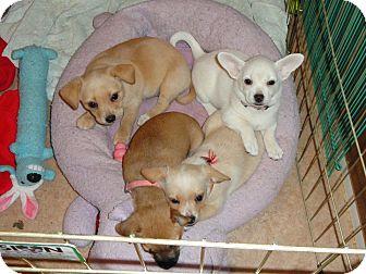 Grass Valley Ca Dog Adoption
