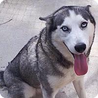 Adopt A Pet :: Lily - Birmingham, AL