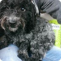 Adopt A Pet :: Bravo - La Quinta, CA