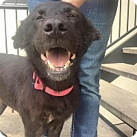 Adopt A Pet :: RUHLA - Littleton, CO