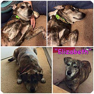 Labrador Retriever Mix Dog for adoption in Salisbury, North Carolina - Lizzy