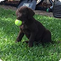 Adopt A Pet :: Sky - Adopted! - Ascutney, VT