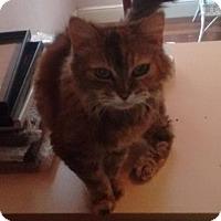 Adopt A Pet :: Emma - Sacramento, CA