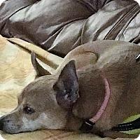 Adopt A Pet :: Lili - San Juan Capistrano, CA