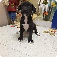 Adopt A Pet :: Ripley - Patterson, NY