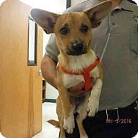 Adopt A Pet :: A570987 - Oroville, CA