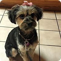 Adopt A Pet :: Muffin - Victorville, CA