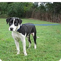 Adopt A Pet :: Bosley - Cookeville, TN