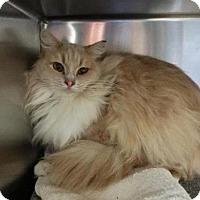 Adopt A Pet :: *FANCY PANTS - Long Beach, CA